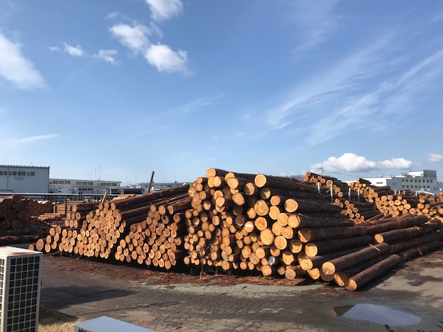 木材市場の原木