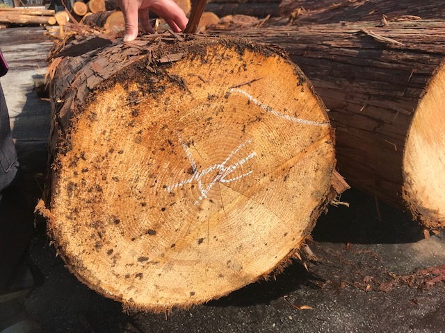 大径の原木材