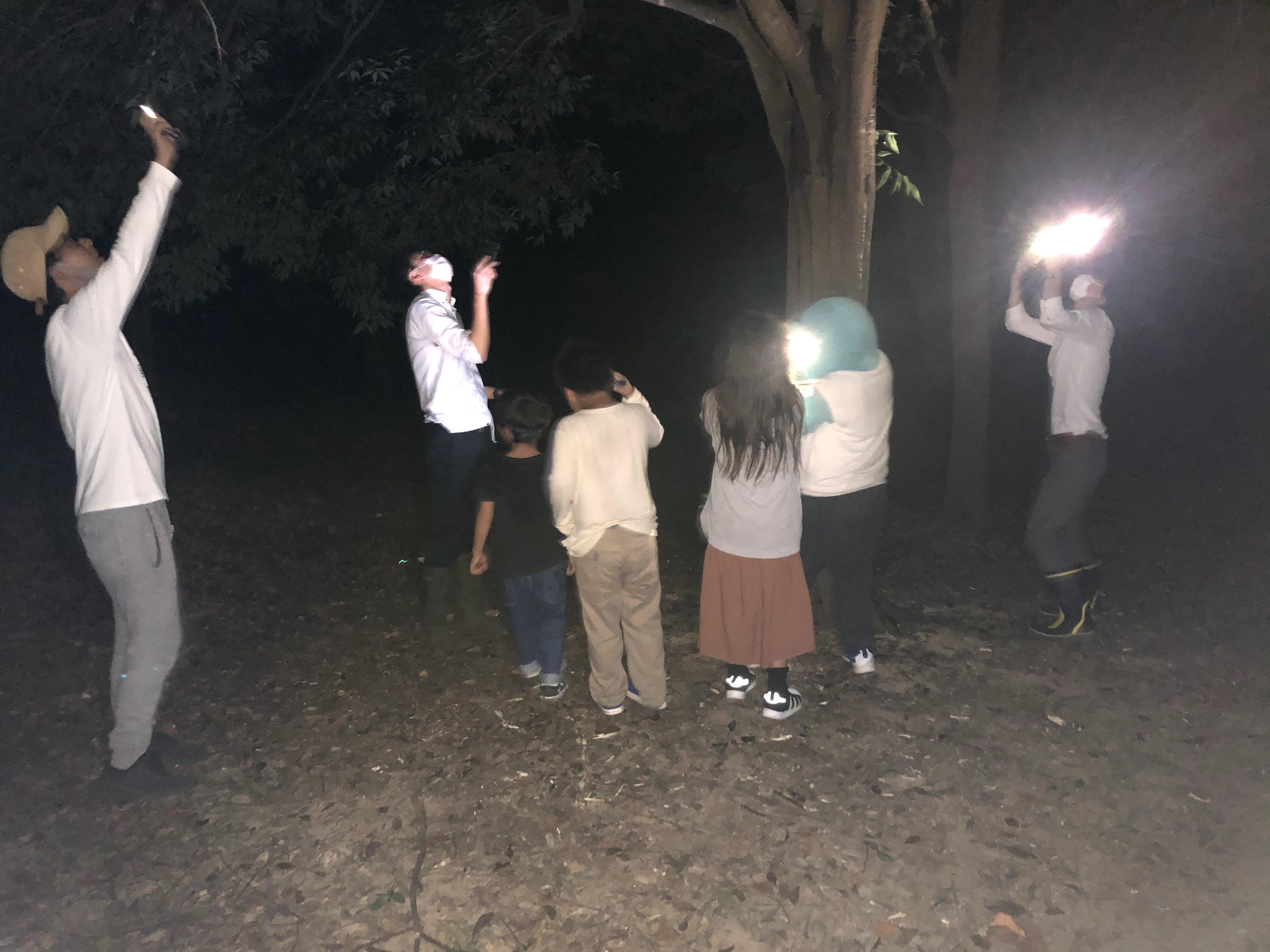 カブトムシ、クワガタ採集 浜松周辺 2020