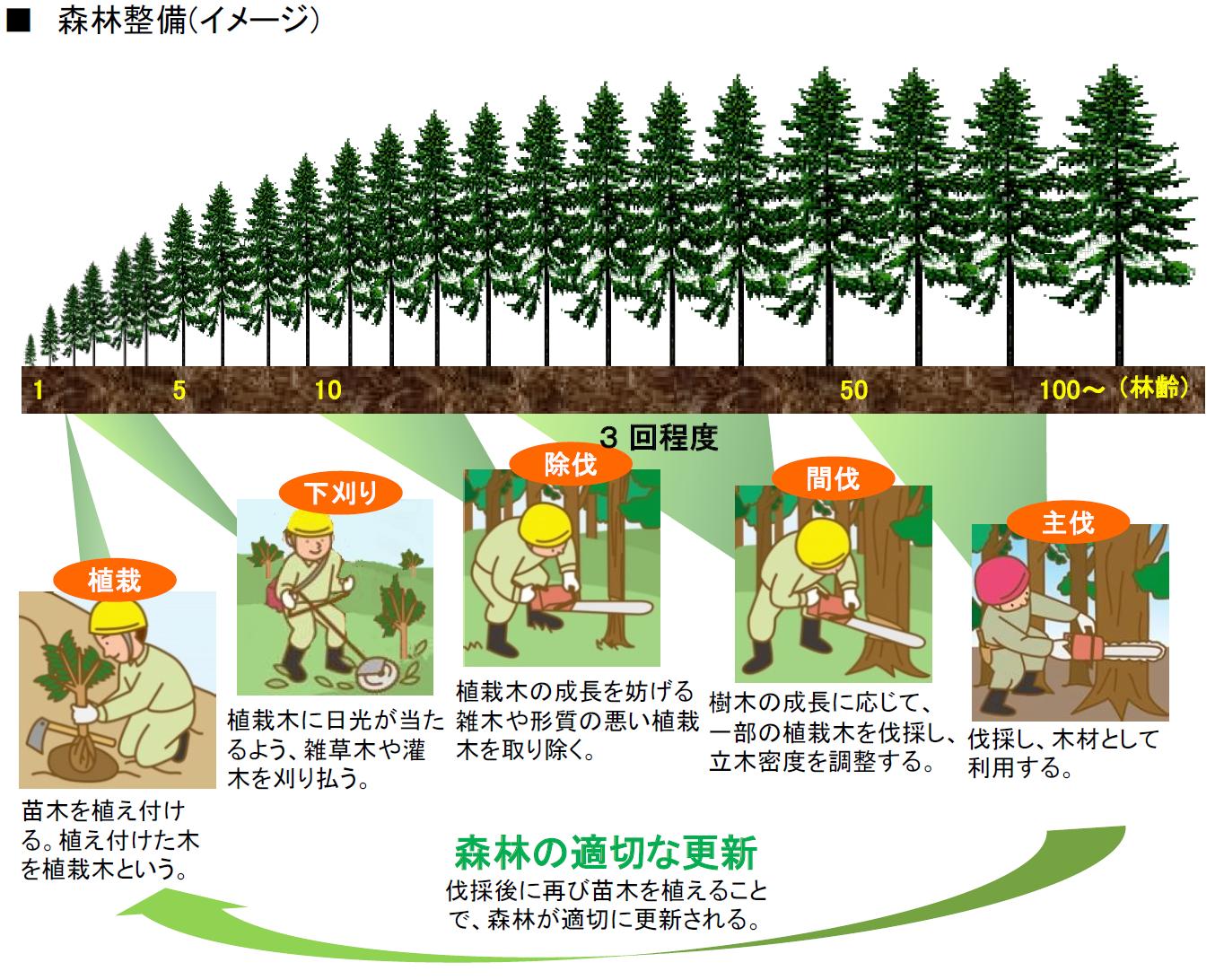 森林の整備イメージ