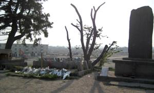 なとり復興桜プロジェクト