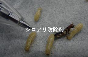 シロアリ駆除剤