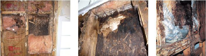 結露により腐ってしまった柱や壁の内部