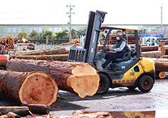 国内木材産業の衰退