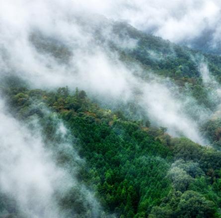 空から撮影した森林の様子