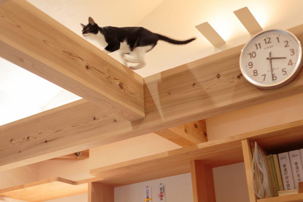 表しの構造材の上を歩く猫