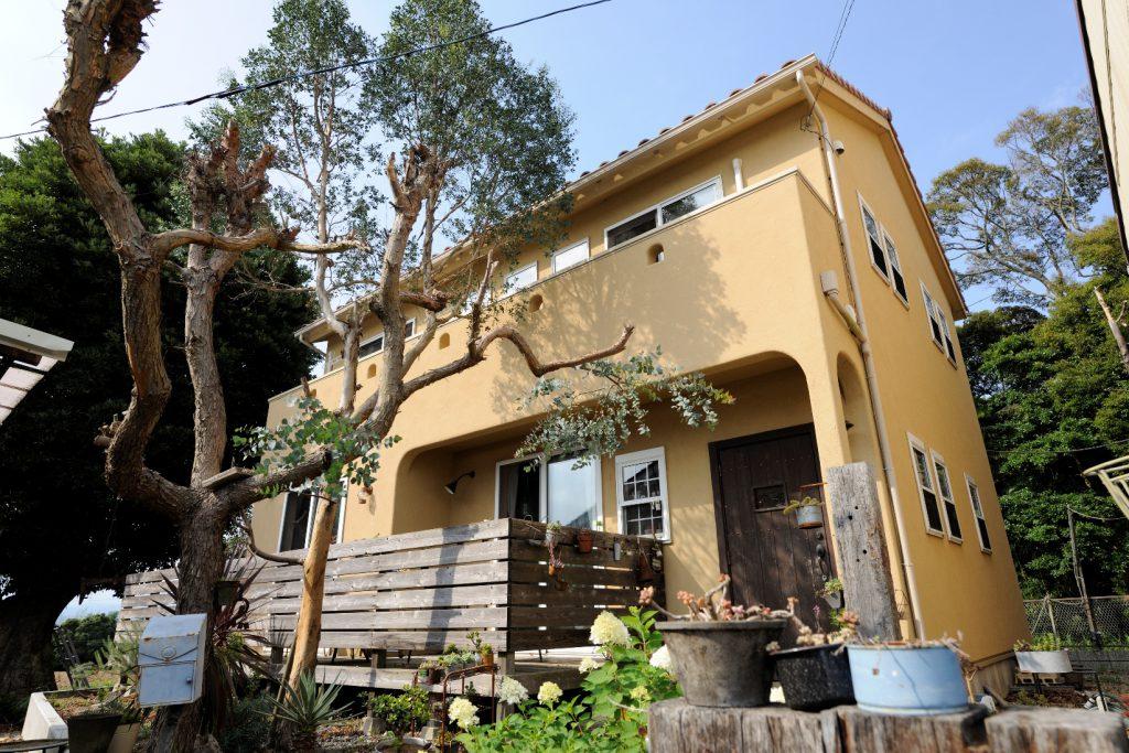 家の高さと肩を並べるようになった ユーカリの木