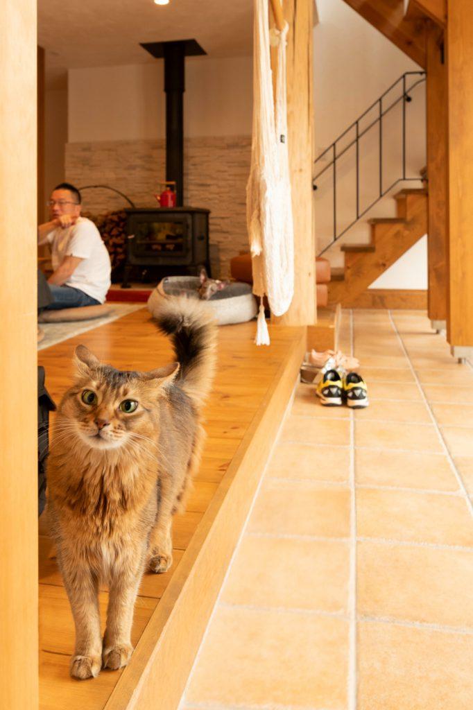 ペットも暮らしやすい自然素材に包まれた空間