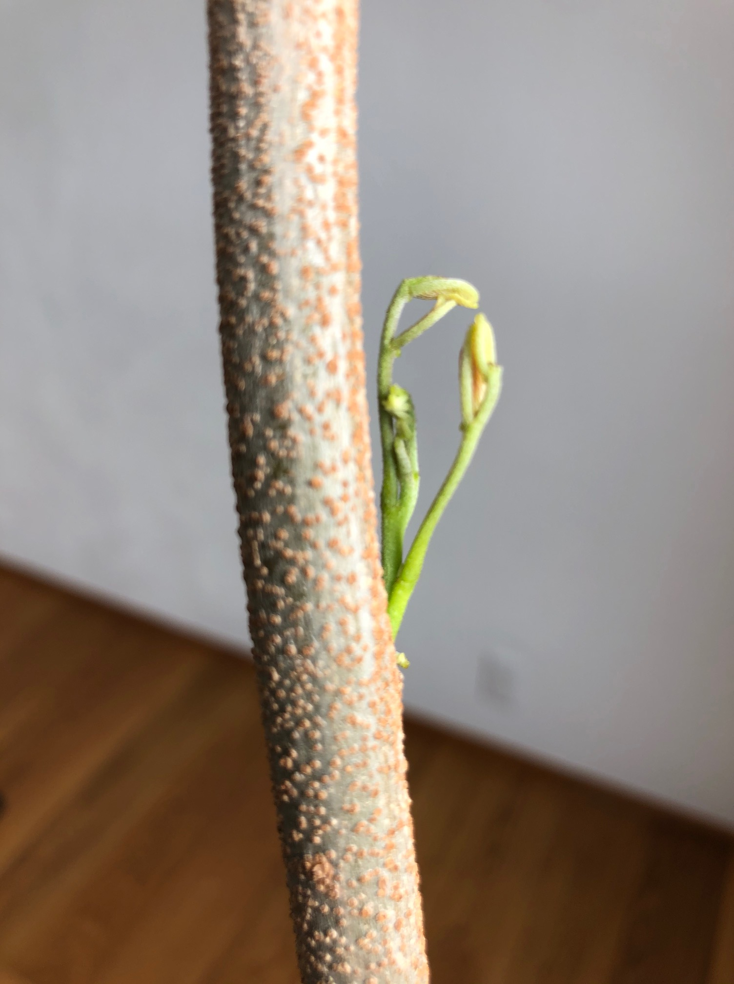 植物と暮らす