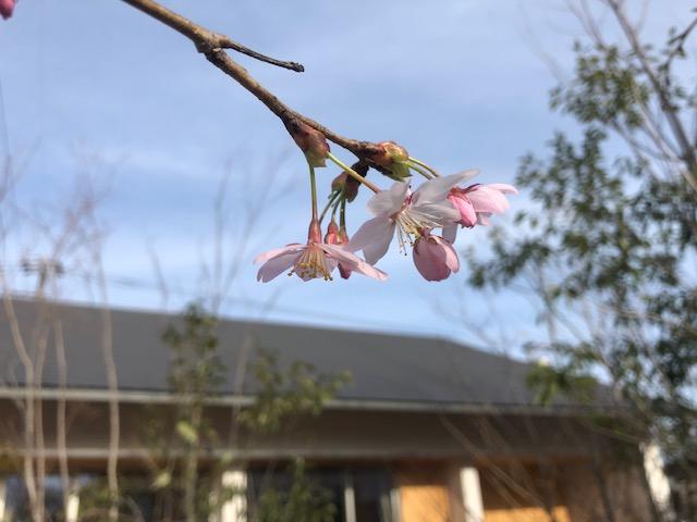 春の花といえば・・・
