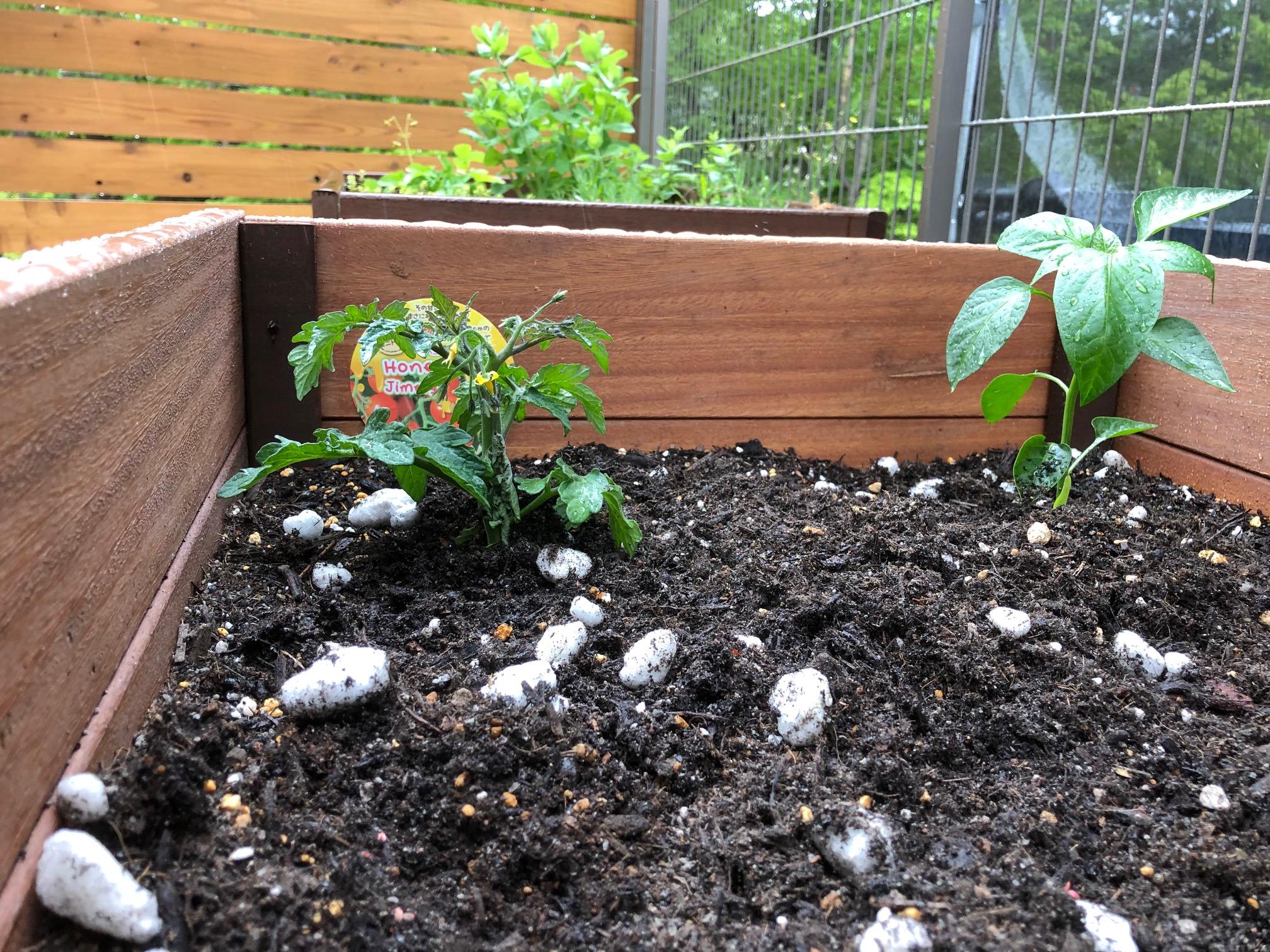 家庭菜園始めました