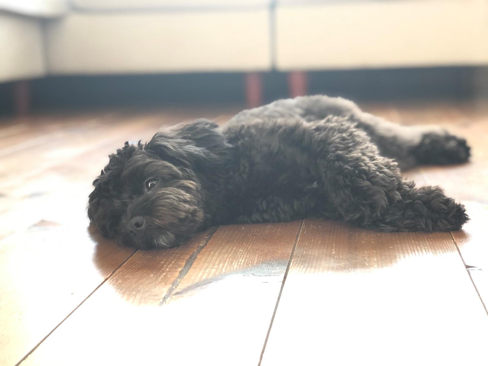 犬と暮らす 自然素材の家